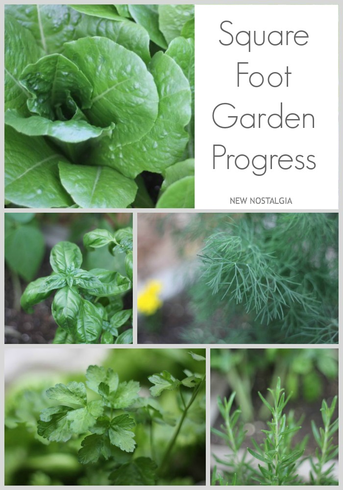 Square-Foot-Garden-Progress-Pinterest