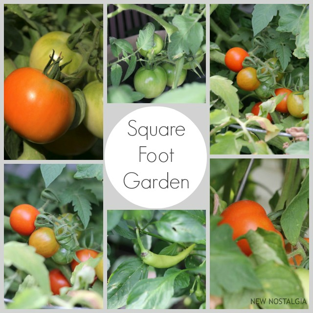 Square-Foot-Garden-Tomatoes-amp-Peppers